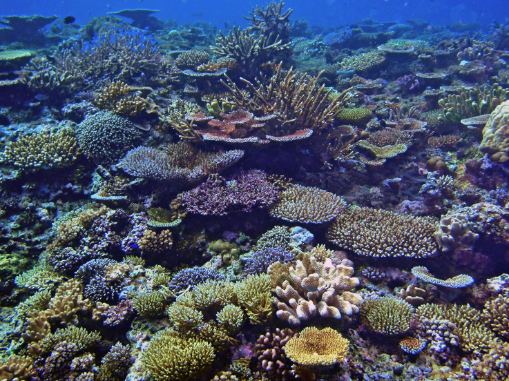 QameaIsland_Fiji_ScottPutnam
